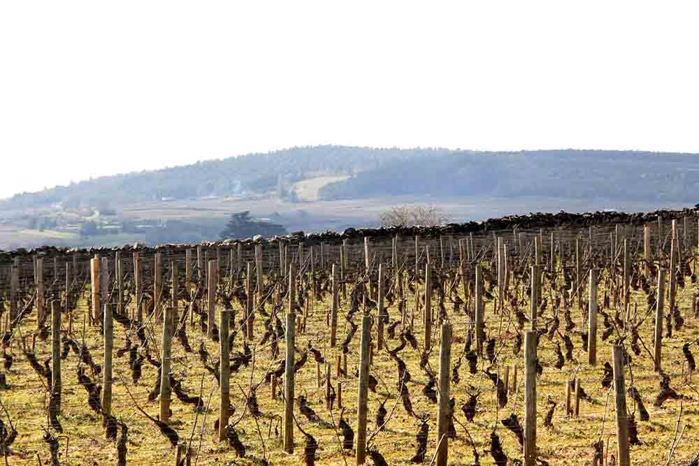 automne-vigne-volnay3